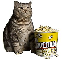 popcorn cat by LennardH