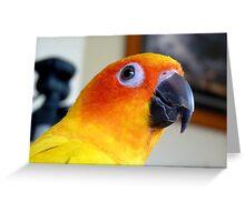 Smile Sunshine! - Sun Conure - NZ Greeting Card