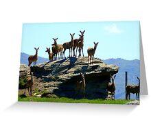 The Vantage Point! - Deer - NZ Greeting Card