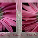 Wonders of Nature - The Gerbera by Ben Shaw