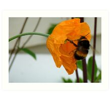 Oops! We Are Falling! - Bumble & Poppy! - NZ Art Print