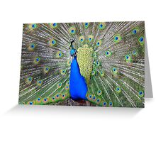 Am I Impressing YOU Yet! - Peacock - NZ Greeting Card