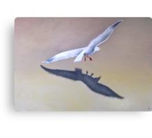 Seagull in Flight 2 Canvas Print