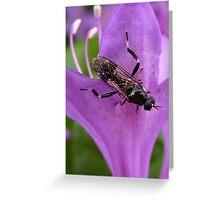 Teeny Weeny Wasp - Wasp & Azalia - NZ Greeting Card
