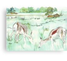 Sketching in the Game Reserve - Springbuck Canvas Print
