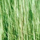 Nature in abstract, green grass in motion blur by brians101