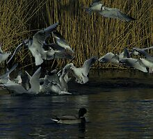 Feeding Frenzy by Sharon Perrett