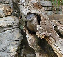 Harry Otter by Keala