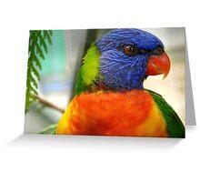 I Am An Eye Catcher.. That Nobody Can Deny!! - Rainbow Lorikeet - NZ Greeting Card