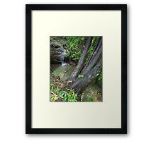 HDR Composite - Cedar Tree and Flowing Stream Framed Print