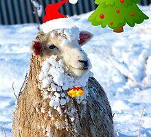 Hey! -  I Wanna Be Santa This Year! - Sheep - NZ by AndreaEL