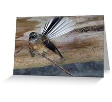 Have You Seen My Fan? - Fantail - NZ Greeting Card