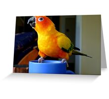 It Doesn't Get Much Better Than This! - Sun Conure Greeting Card