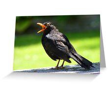 Hey, This Is My Spot! - Blackbird - NZ Greeting Card