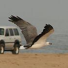 Stockton Sea Eagle by PPV247