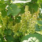 white fruit by kveta