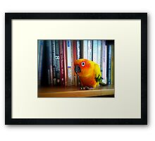 You've Got To Be Kidding Me! A Book By Les Parrott - Sun Conure - NZ Framed Print