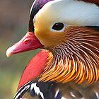 Mandarin Duck by Neil Bygrave (NATURELENS)