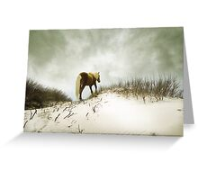 happy trails Greeting Card