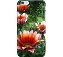 Gazania daisies iPhone Case/Skin