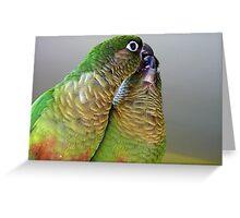 Happy Valentines Day! - Bubbles & Echo - Maroon-bellied  Conure NZ Greeting Card