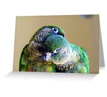 Cuddles - Maroon-bellied Conure - NZ Greeting Card