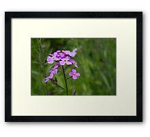 HDR Composite - Purple Flox Phlox Name Something Something 2 Framed Print