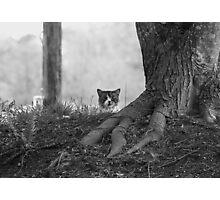 Peek-a-Boo B&W Photographic Print