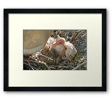 Pterodactyl - Beautiful-Ugly - Baby Collard Dove - NZ Framed Print
