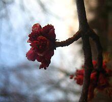 blossom by EimilesArt
