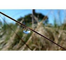 Horton Hears A Who -  Dew Drop - NZ Photographic Print