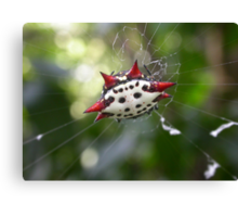 Crab-Like Spiny Orb-Weaver Canvas Print