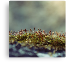 tiny forest Canvas Print