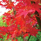 maple tree by dydydada