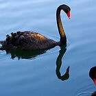 black swans by Martin Pot
