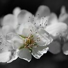 In Bloom by mgeritz
