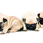 Five Pugs in a Row by Oneof42