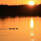 Three amigos on golden lake by Leo Sapene