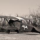 Fokker D VII by Kofoed
