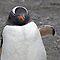 Do Penguins have emotions?