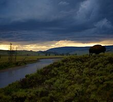 Yellowstone National Park by Chaney Swiney