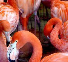 Pretty Flamingo by Lee Kerr