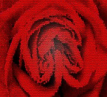 Wild Red Rose by Alec Owen-Evans
