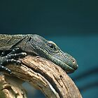 Lizard at Rest by sarrobi