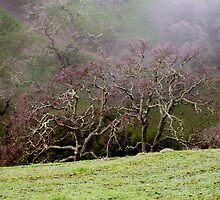 borges ranch trees by Robbin Milne