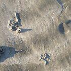 sand4 by wespenspinne