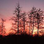 sunset1 by wespenspinne
