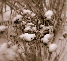 Grass and Sedum in Winter by Sheri Ann Richerson
