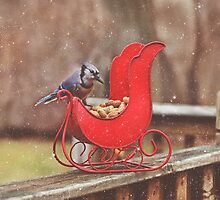 Winter Blue Jay #3 by Pat Abbott