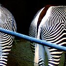 Two Zebras by Mary Kaderabek-Aleckson